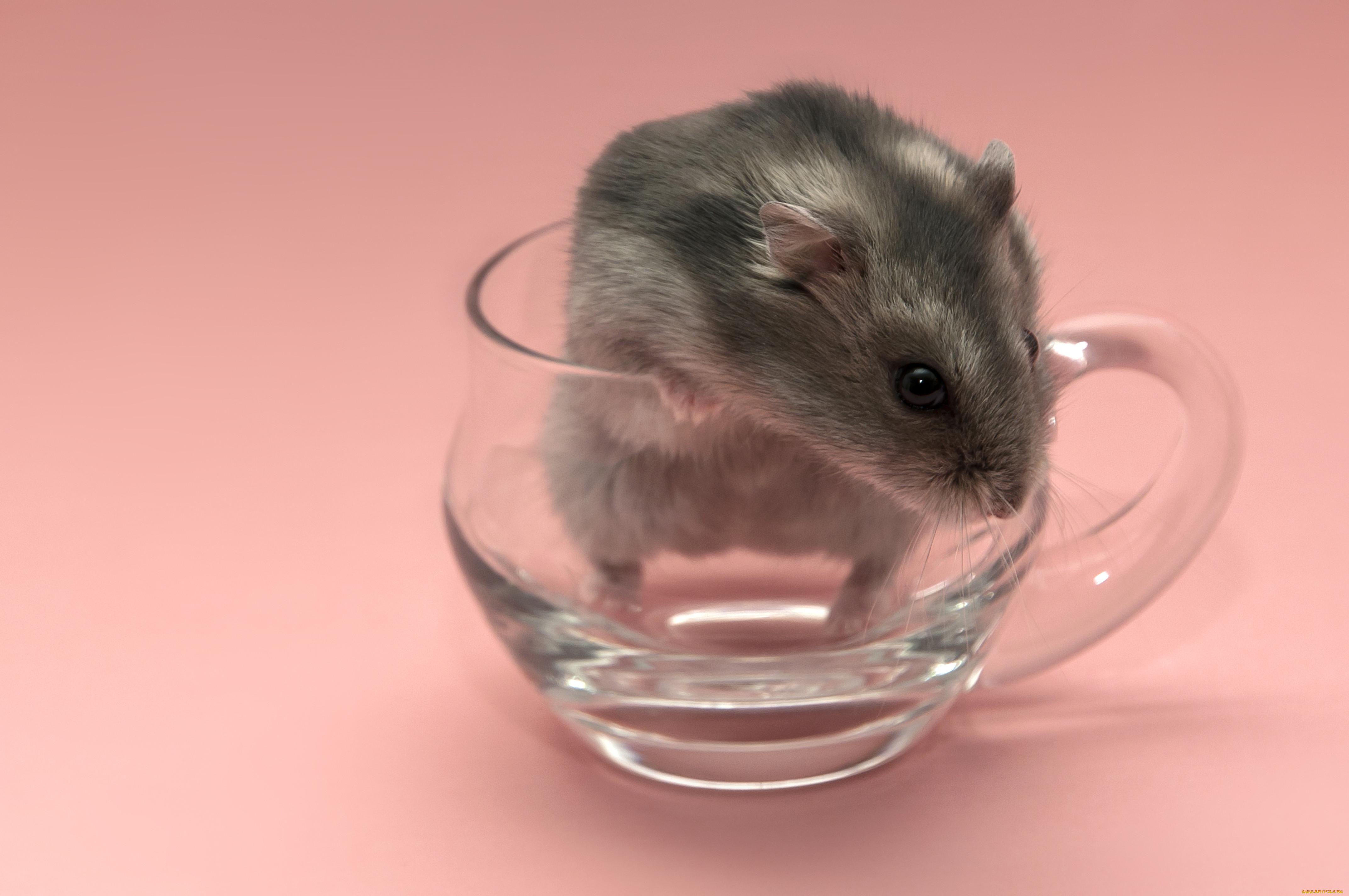 картинки на телефон мыши